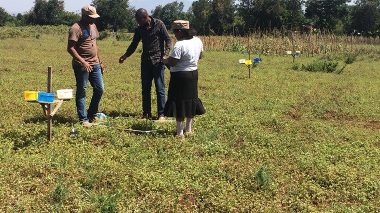 Darwin Initiative Students conducting biodiversity surveys in bean field fallows