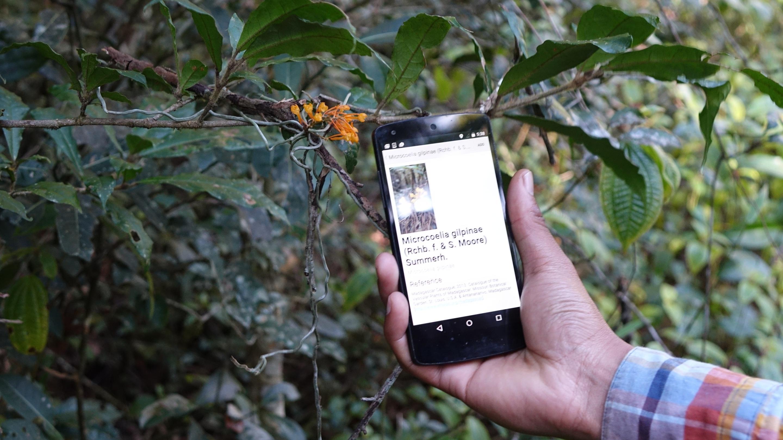 Recording threatened Madagascan plants