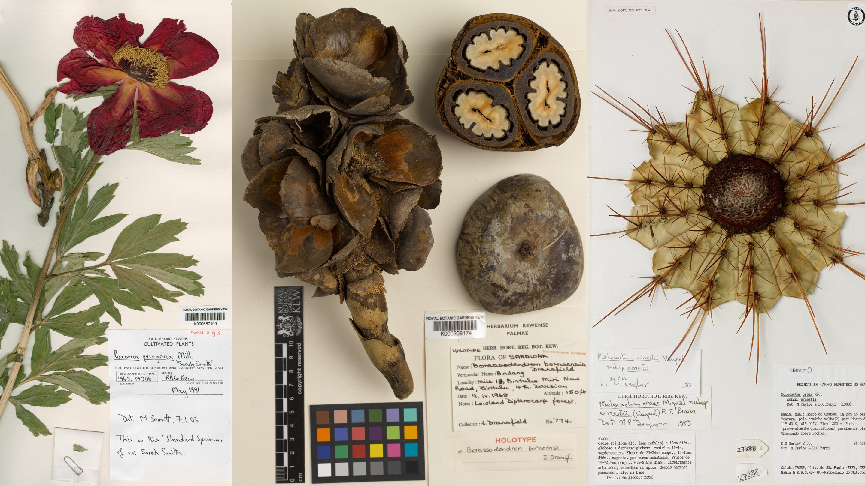 Herbarium specimens for digitisation