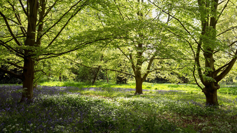 The Arboretum at Kew