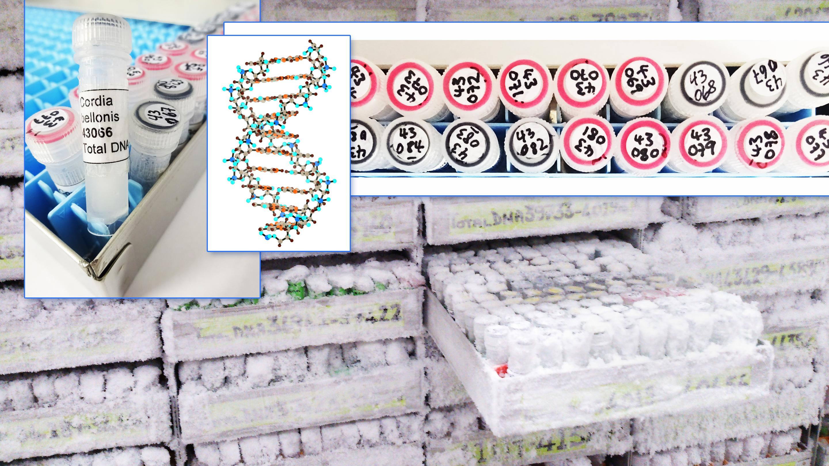 DNA and Tissue Bank