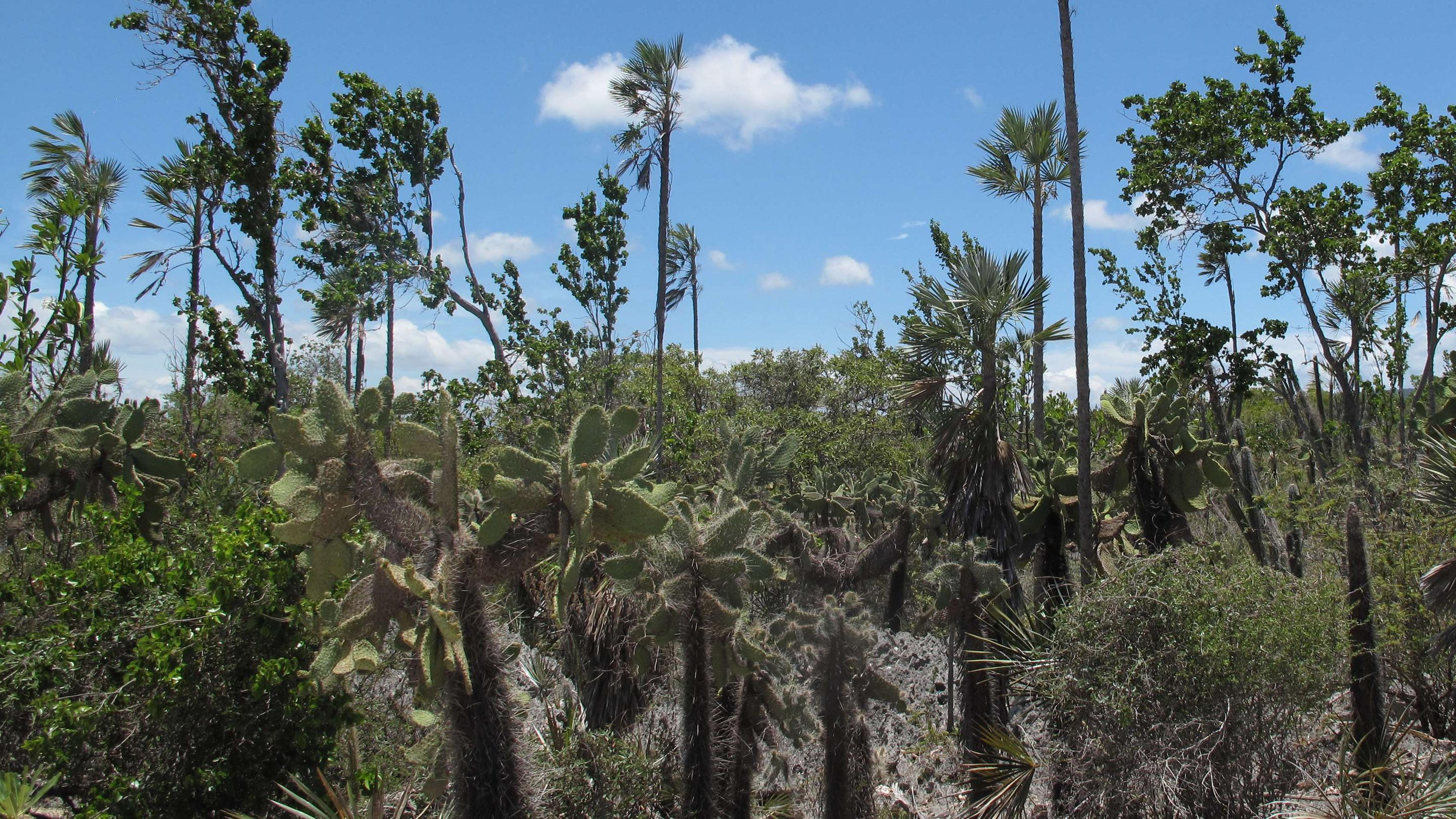 conservation and sustainable use of native trees in mesoamerica
