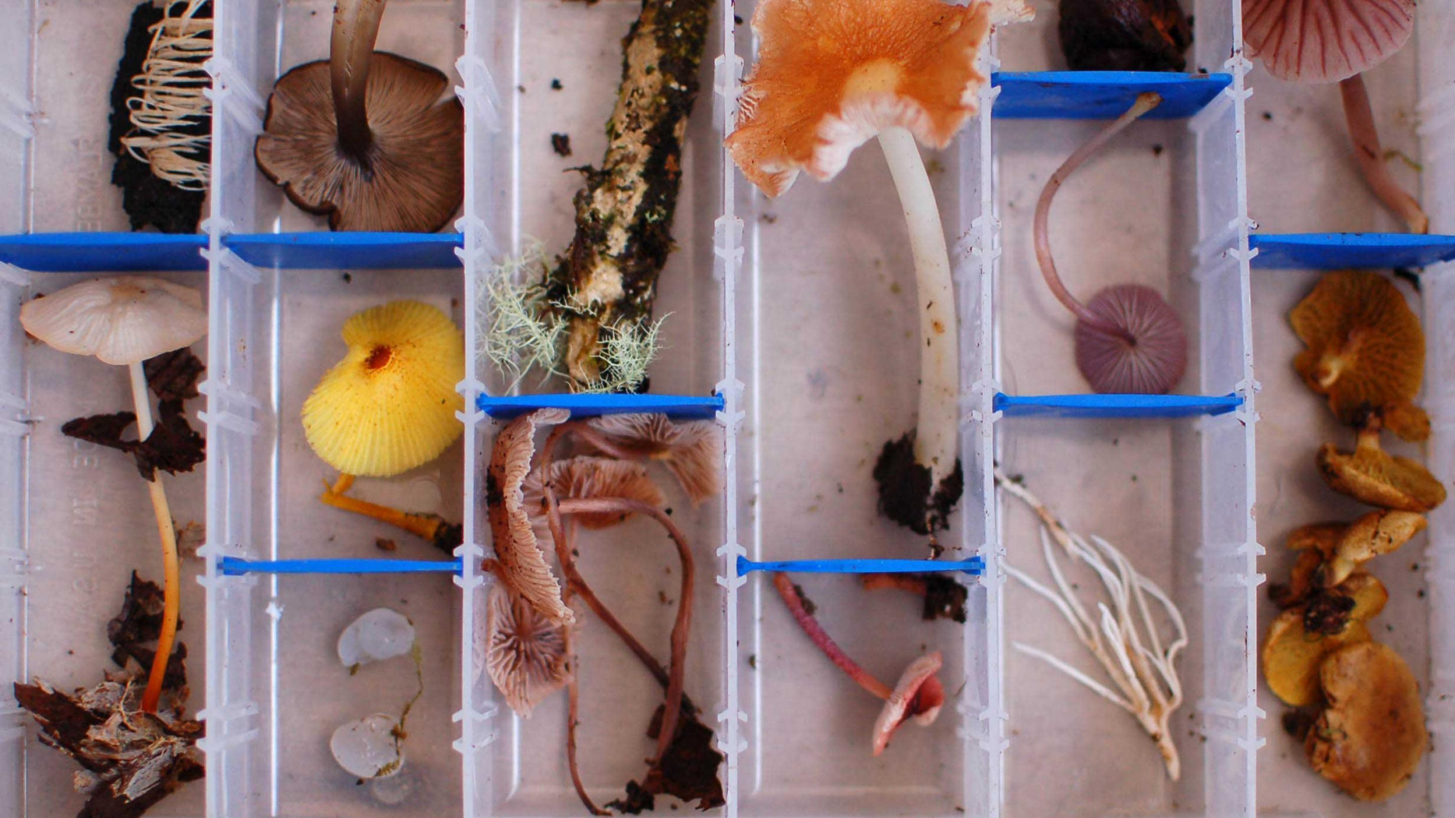 Photo showing diversity of mushrooms from a cloud forest in Ecuador (Image: B. Dentinger)