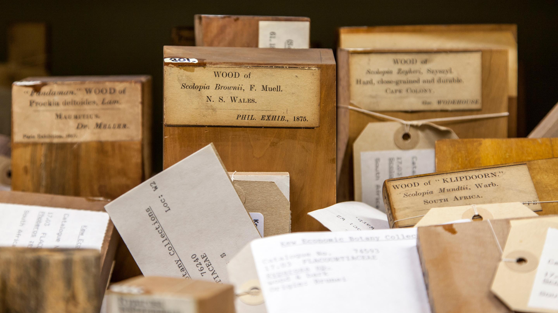 Economic Botany Wood Collection