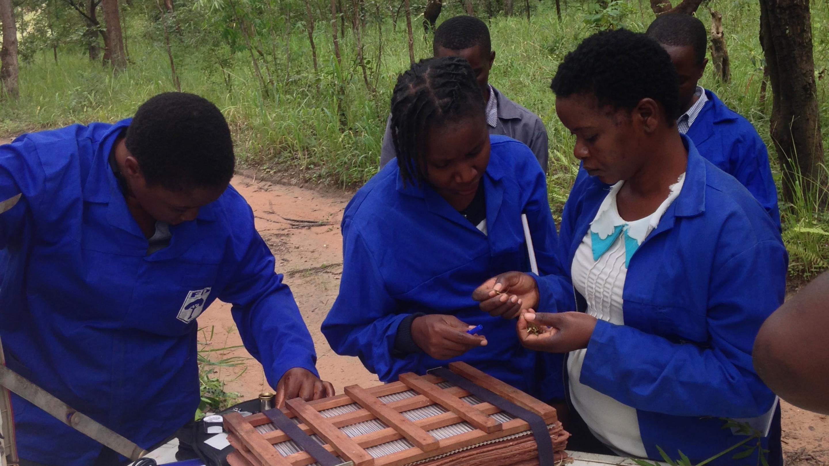 Image showing Staff members of the Forestry Research Division getting to grips with seed collecting techniques.