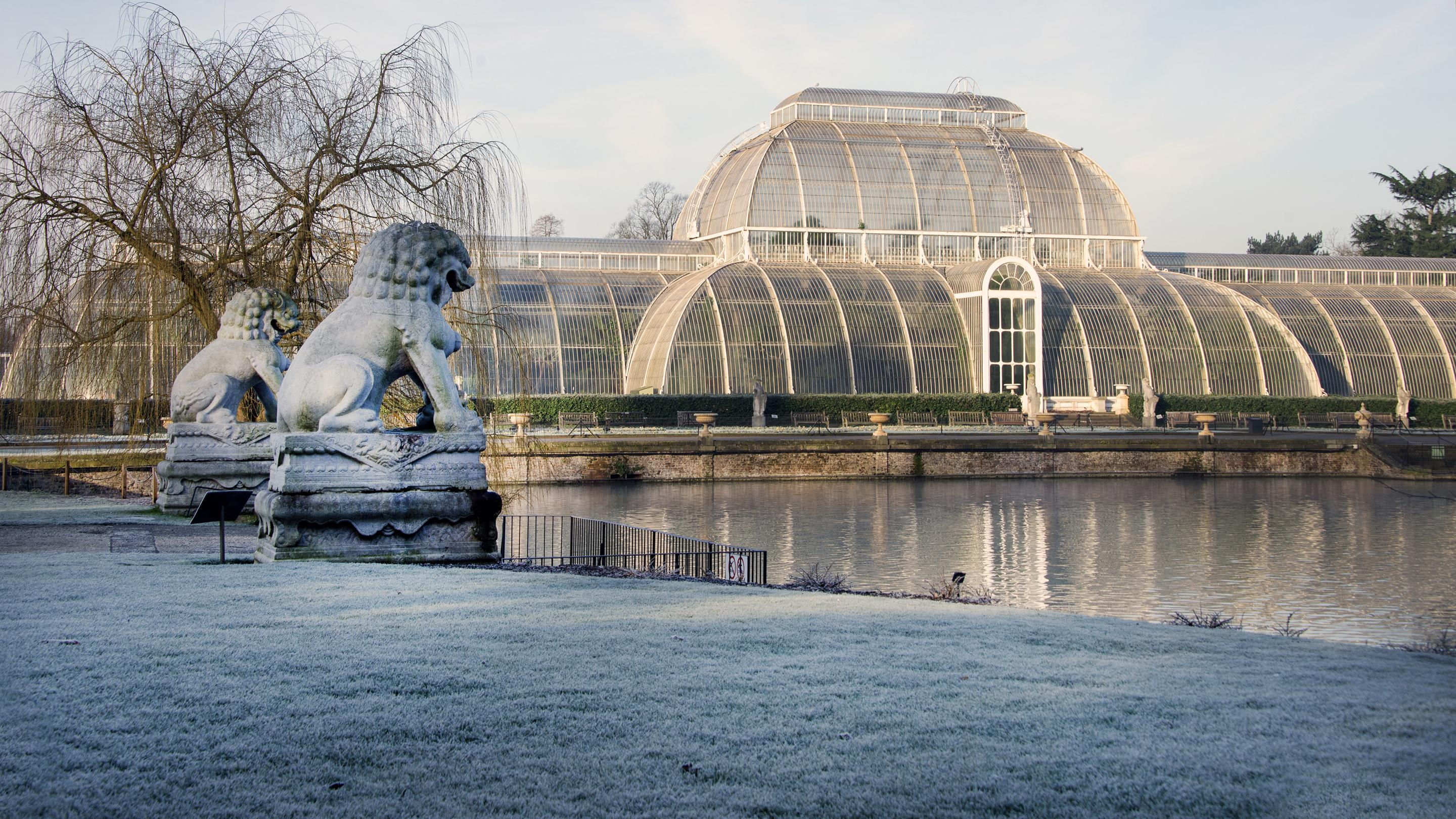 The Palm House in winter