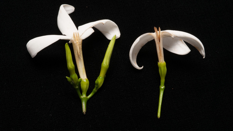Ks2 90 mins plant scientists kew ks2 plant scientists ccuart Image collections
