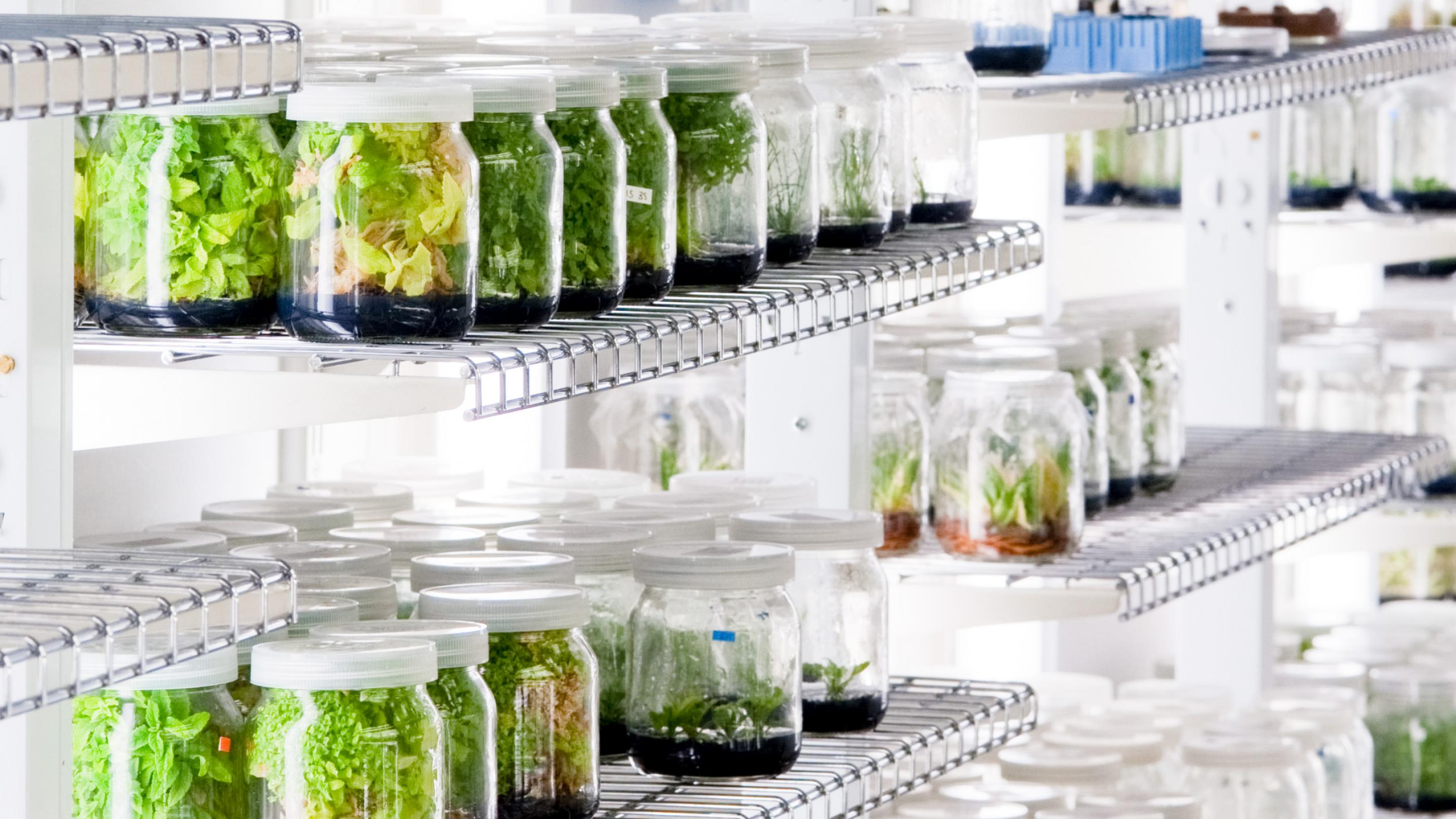 Image showing The In Vitro Collection at Kew consisting of plant specimens and fungi that have been cultured in artificial growing media.
