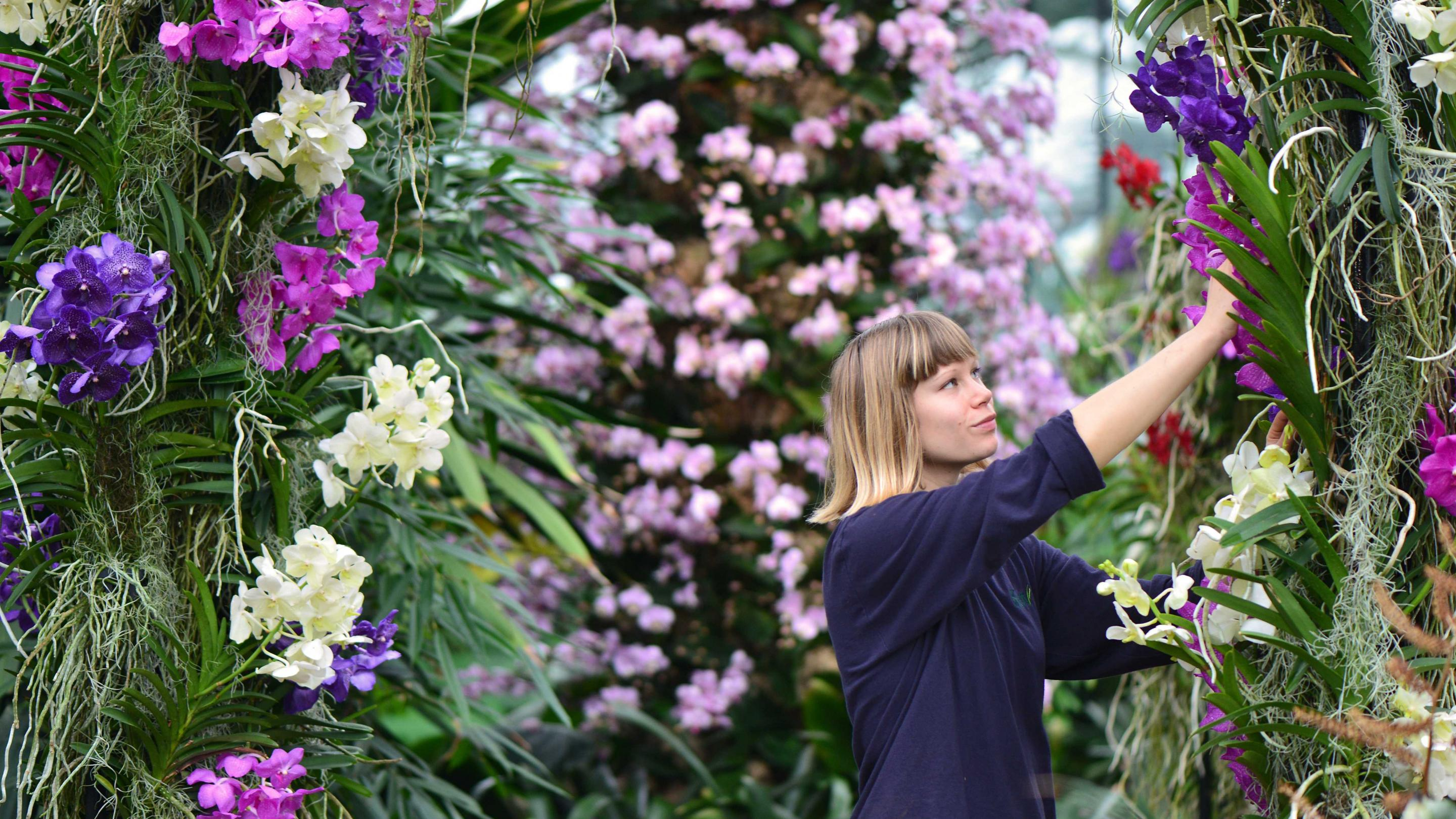 Press Release Kew S First Thai Inspired Orchids Festival