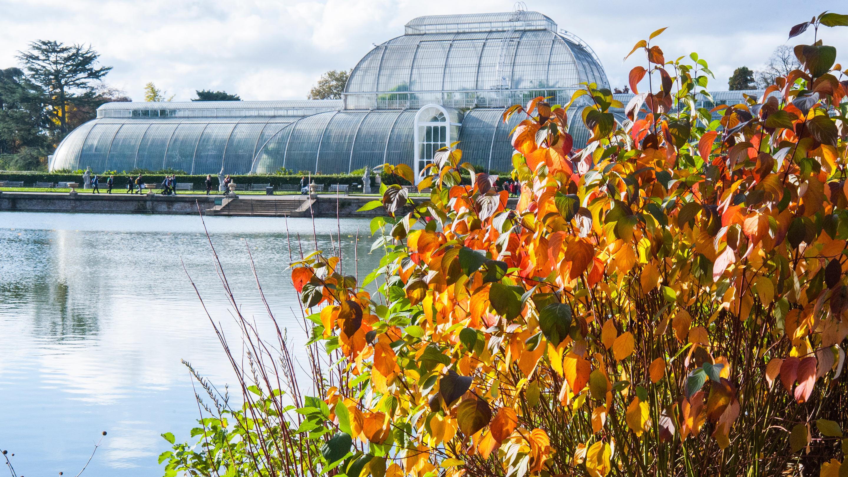 The Palm House in autumn