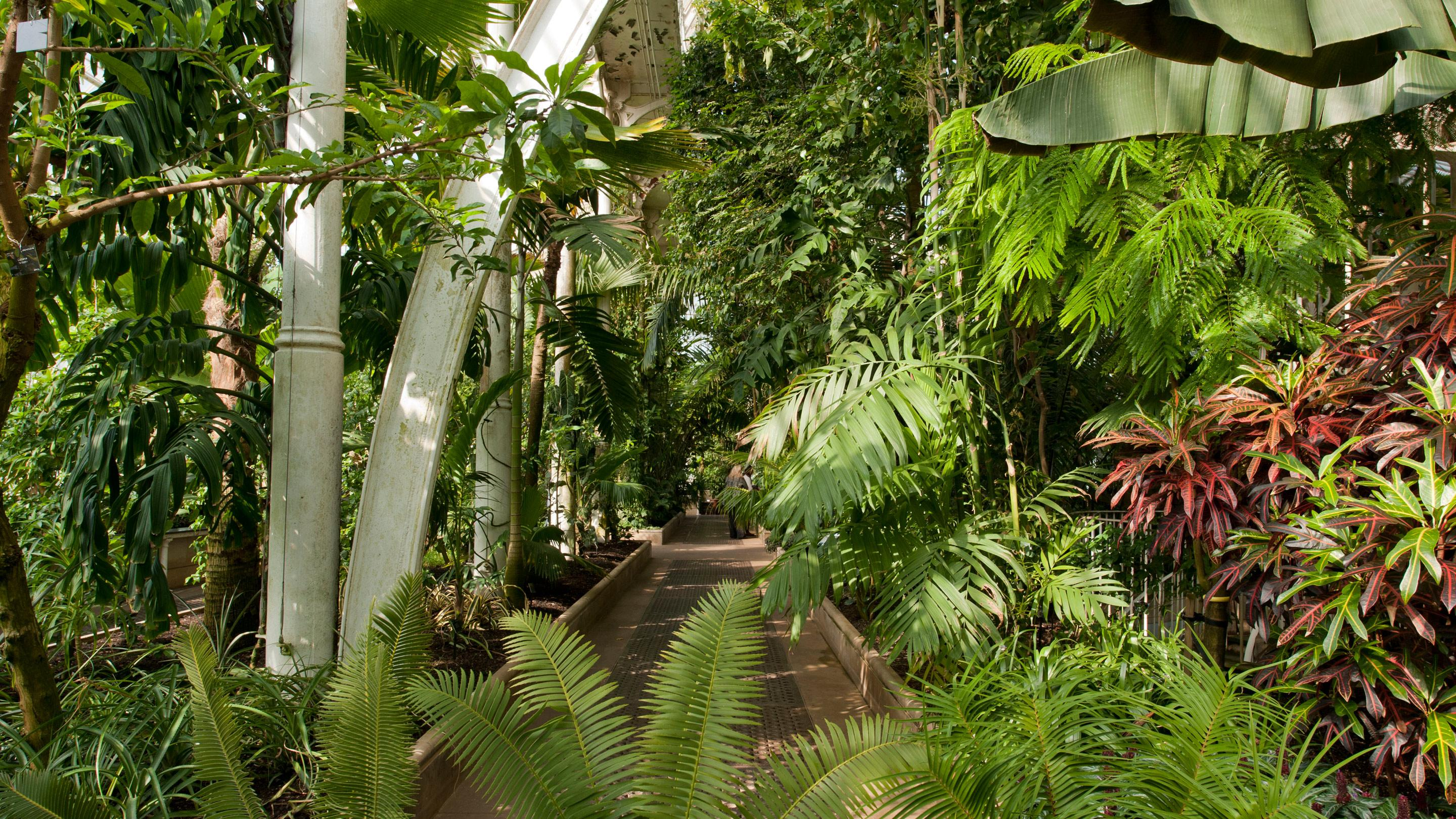 Inside Kew's Palm House