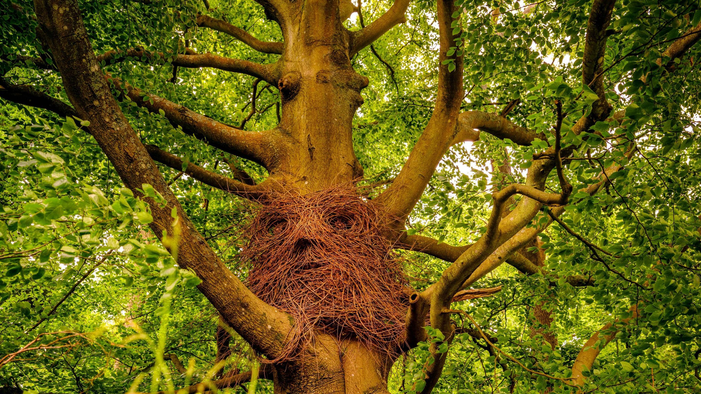 Sculpture in Pearcelands Wood