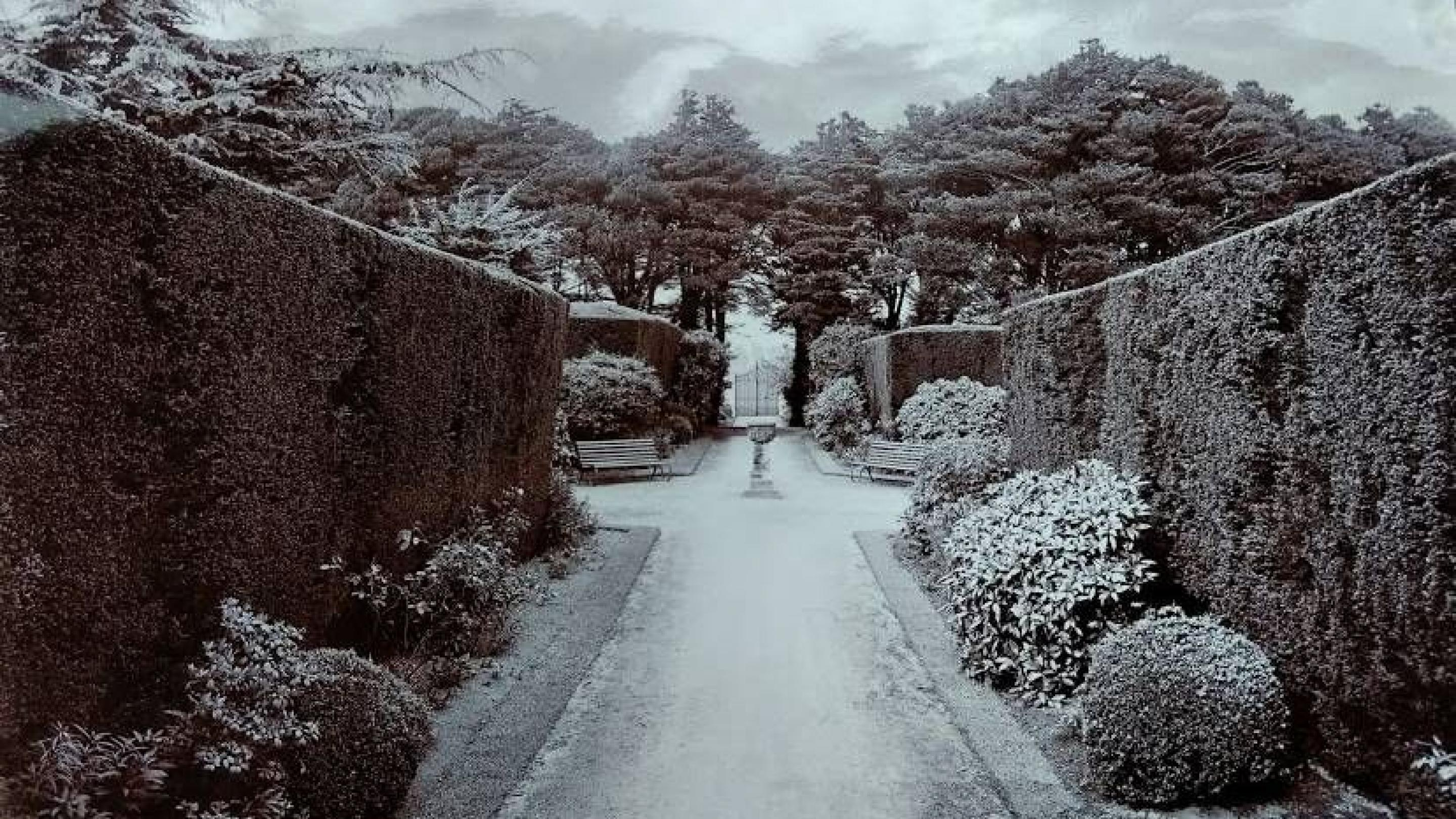 Picture of hedges sent to John Lowe