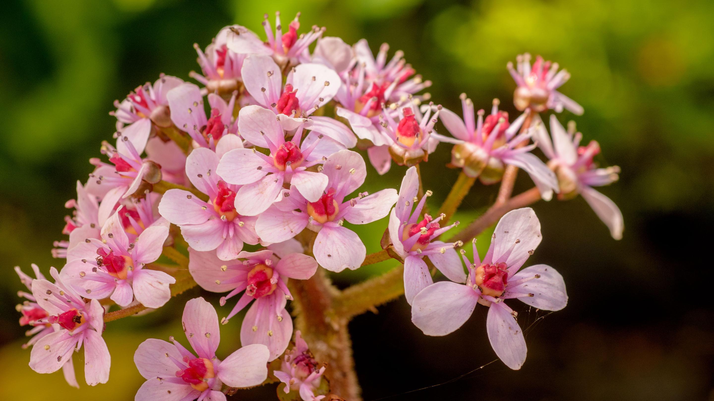 Spring flowers at Wakehurst (Image: Jim Holden)
