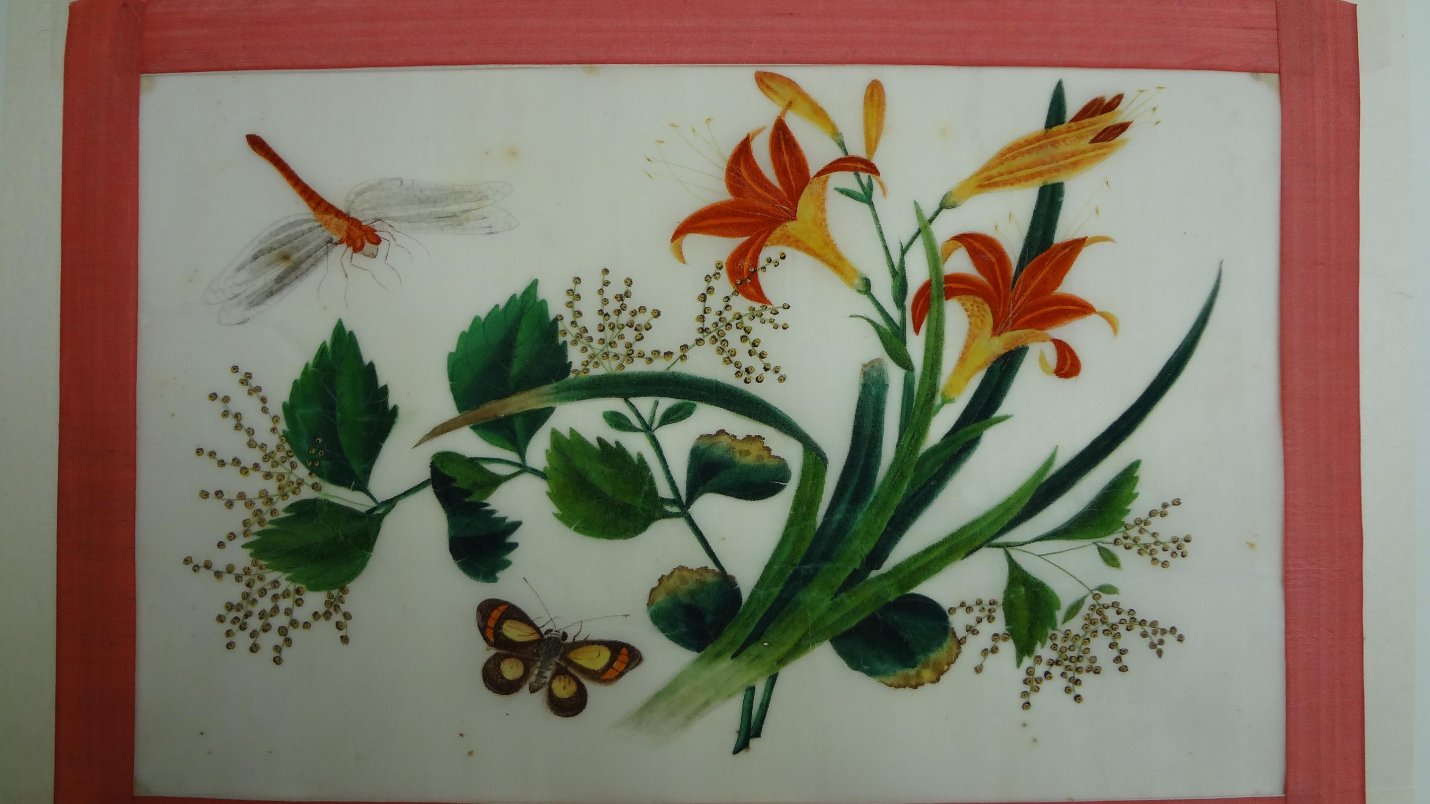 Conserving Chinese Pith Paintings Kew