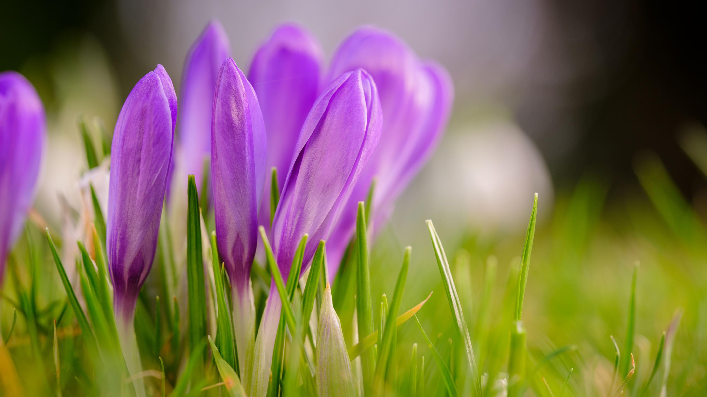 Spring at Wakehurst (Image: Jim Holden)