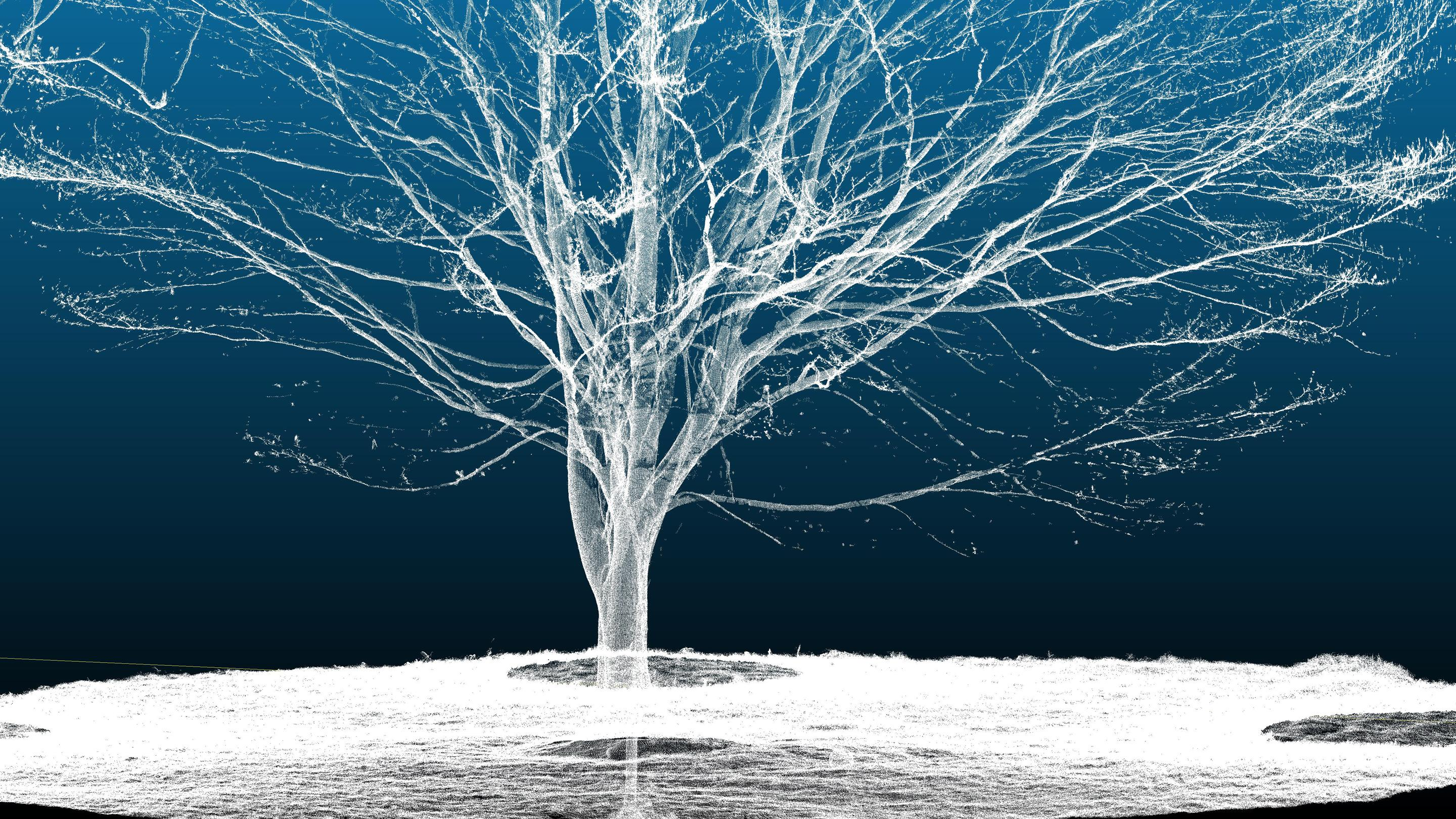 Scan of beech tree from Secret Structures exhibition