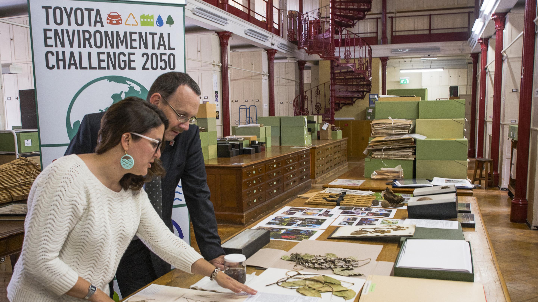 Serene Hargreaves (Kew) and Steve Hope (Toyota) in Kew's Herbarium