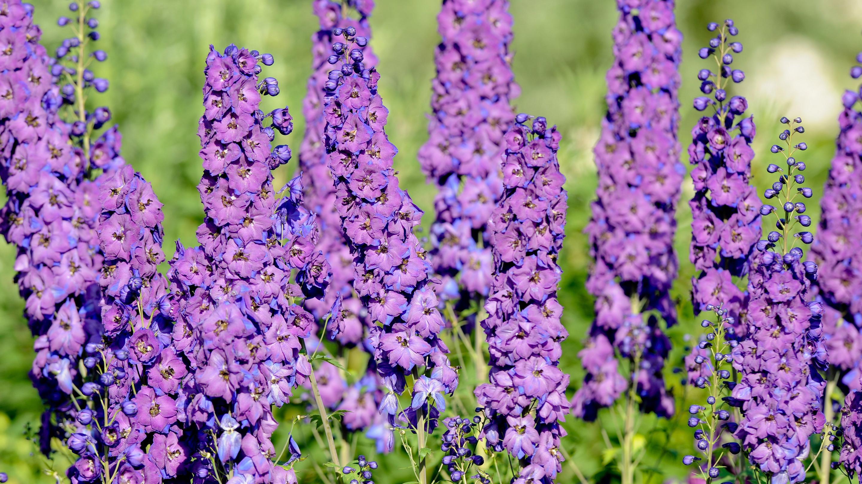 Summer flowers at Wakehurst