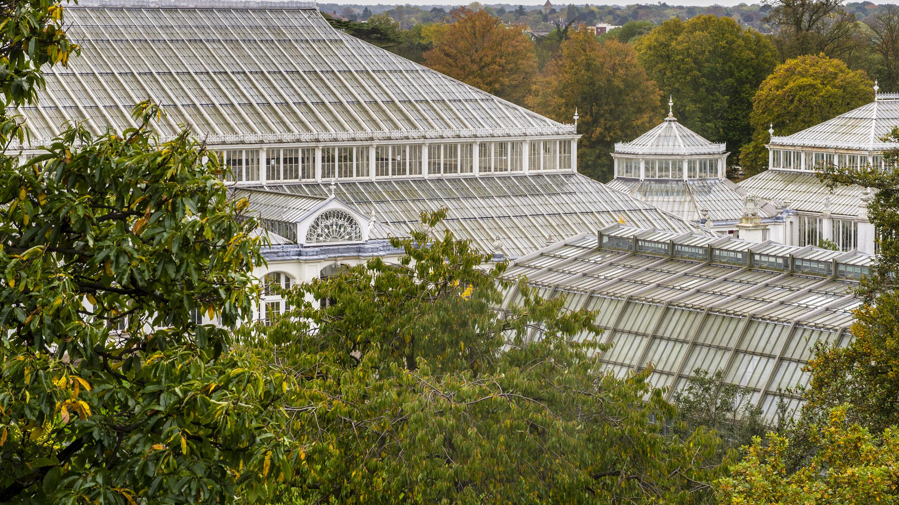 Donate to our Temperate House