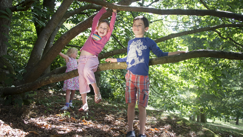 Children playing in Wakehurst Woodland area