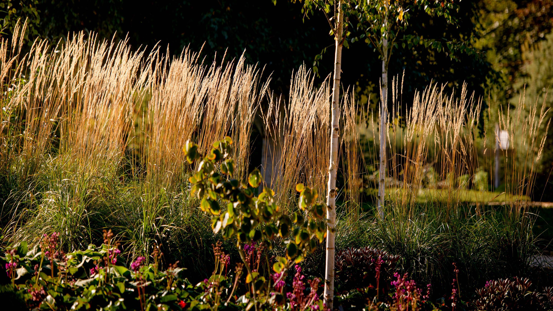 The winter garden at Wakehurst