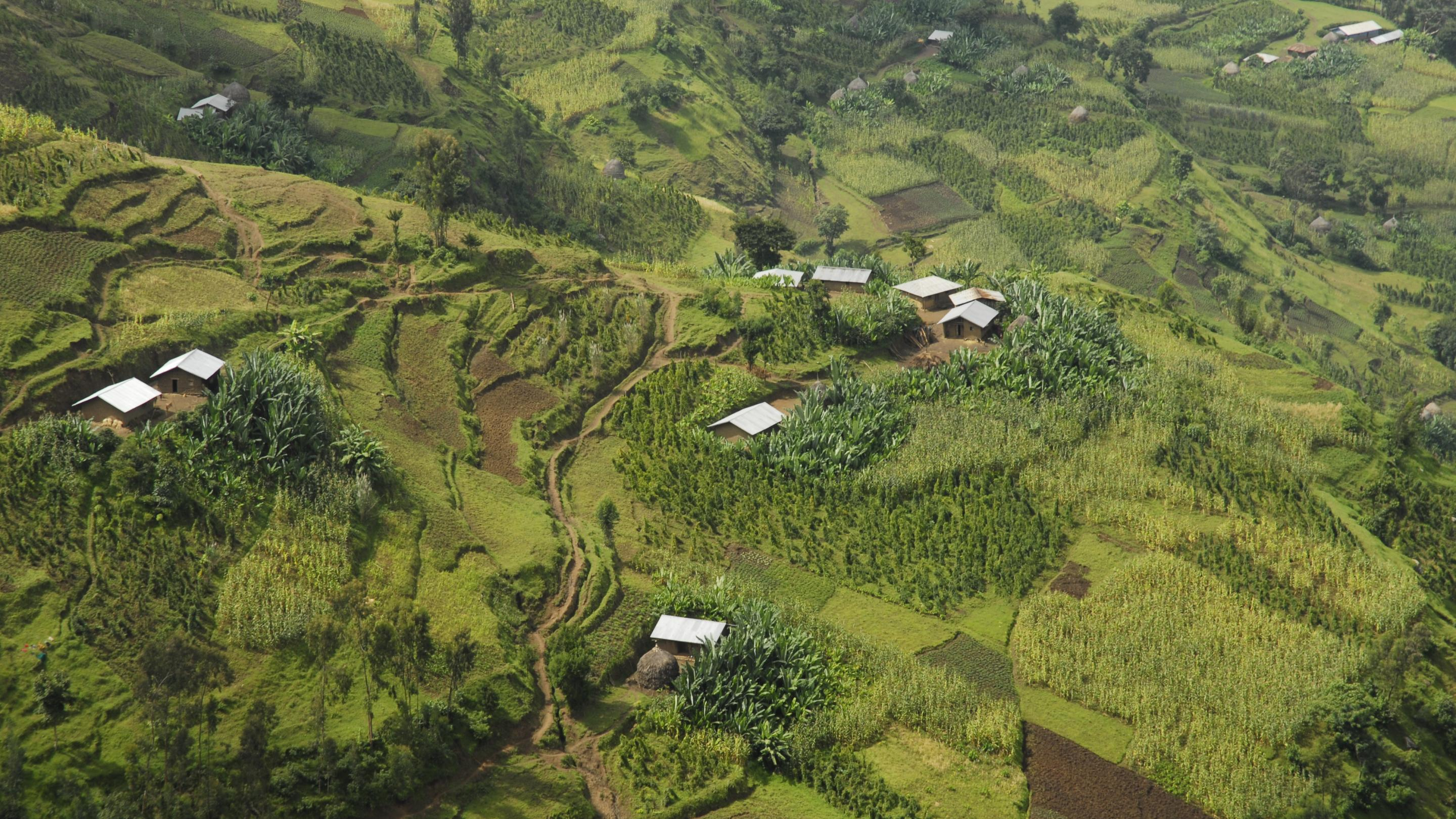 Image showing Enset in the Agri-landscape of South West Ethiopia