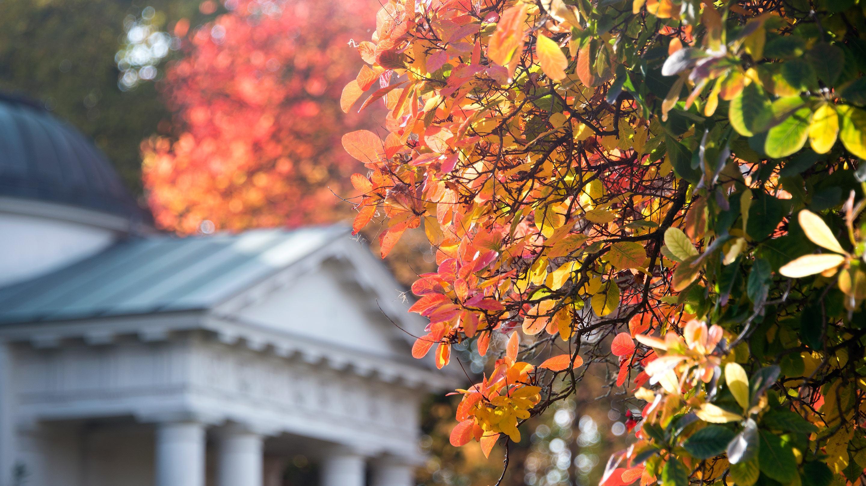 Autumn leaves at Kew