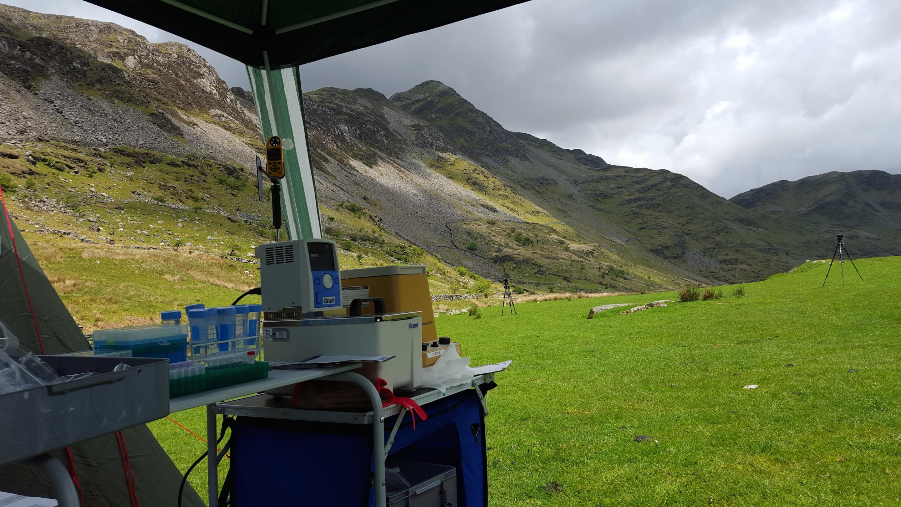 Plant identification in Snowdonia National Park