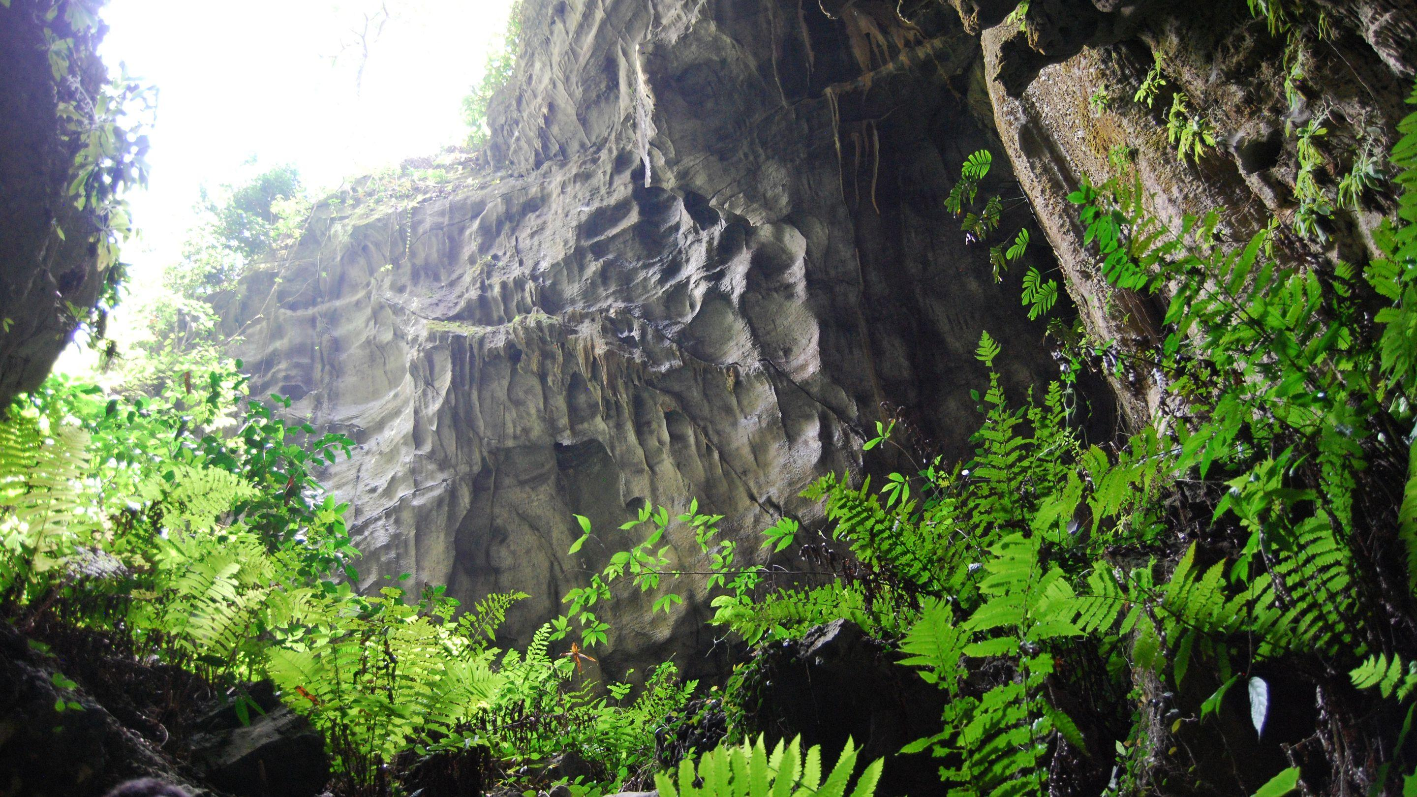 Cave flora in China (Image: Alex Monro)