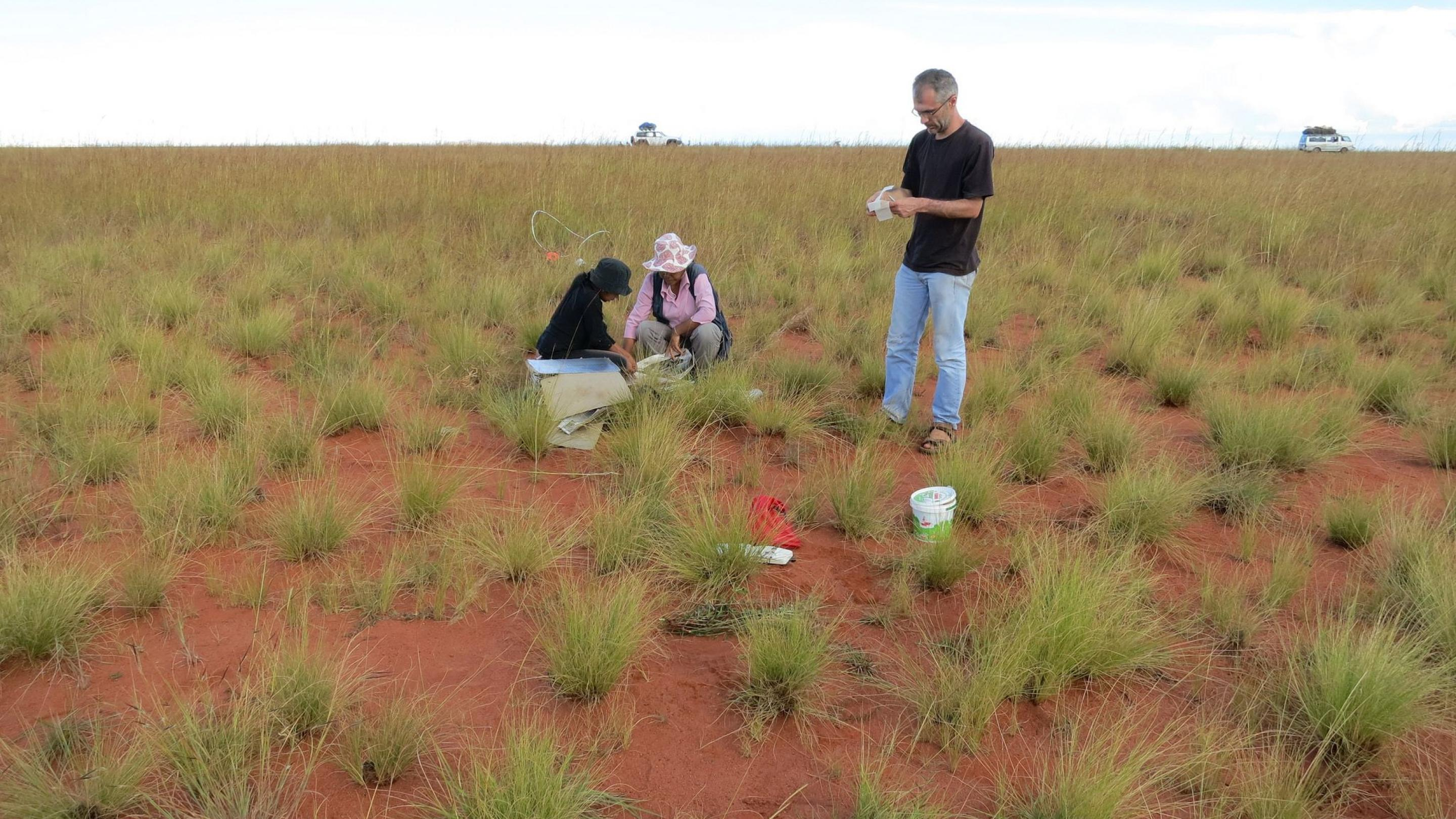 Image showing a grass dominated ecosystem on the Horombe plateau in central Madagascar occupy 20– 40% of Earth.