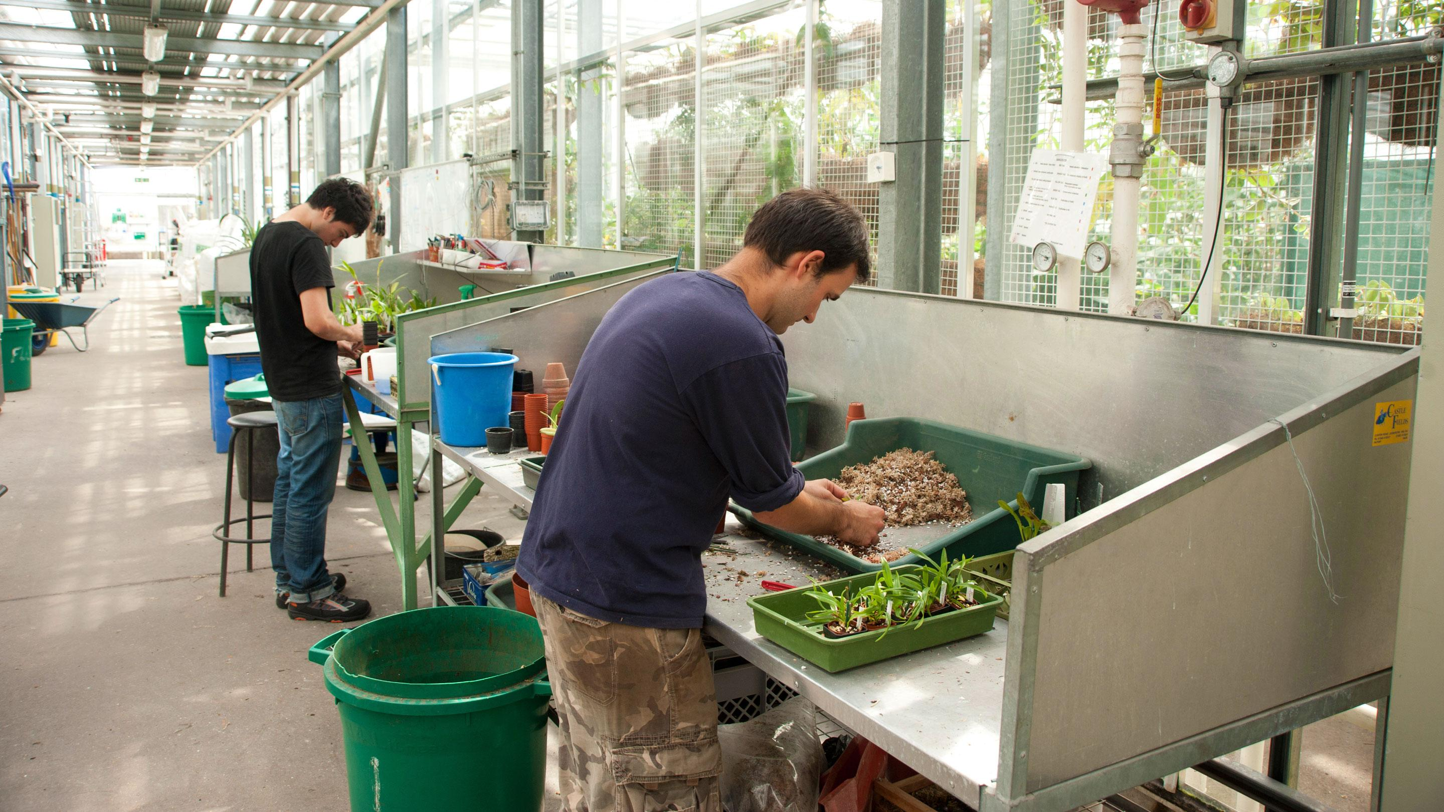 Horticulture training at Kew Gardens