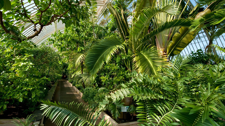 Inside the Palm House