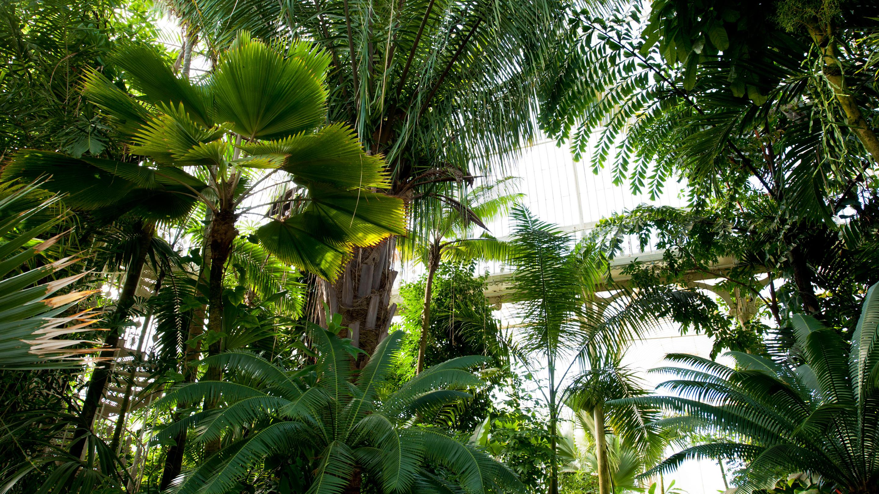 Inside the tropical Palm House
