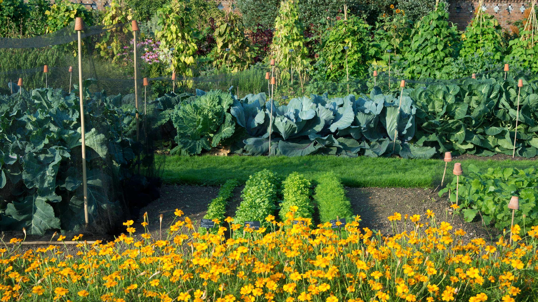 Kitchen garden kew for Kitchen garden