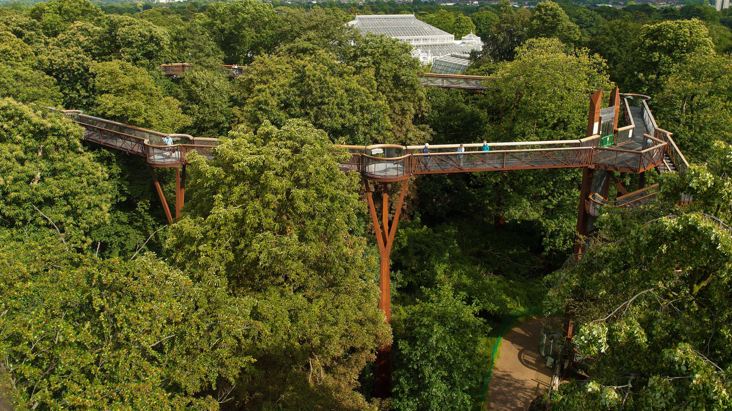 Captivating Aerial View Of The Treetop Walkway