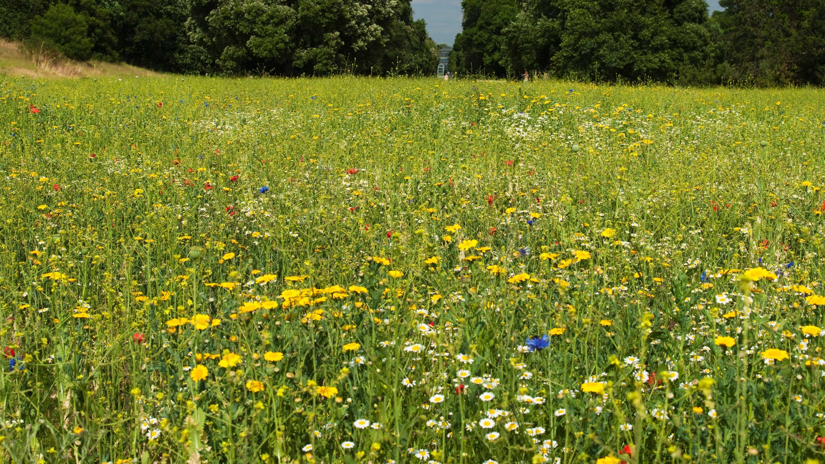 Why meadows matter kew for The meado
