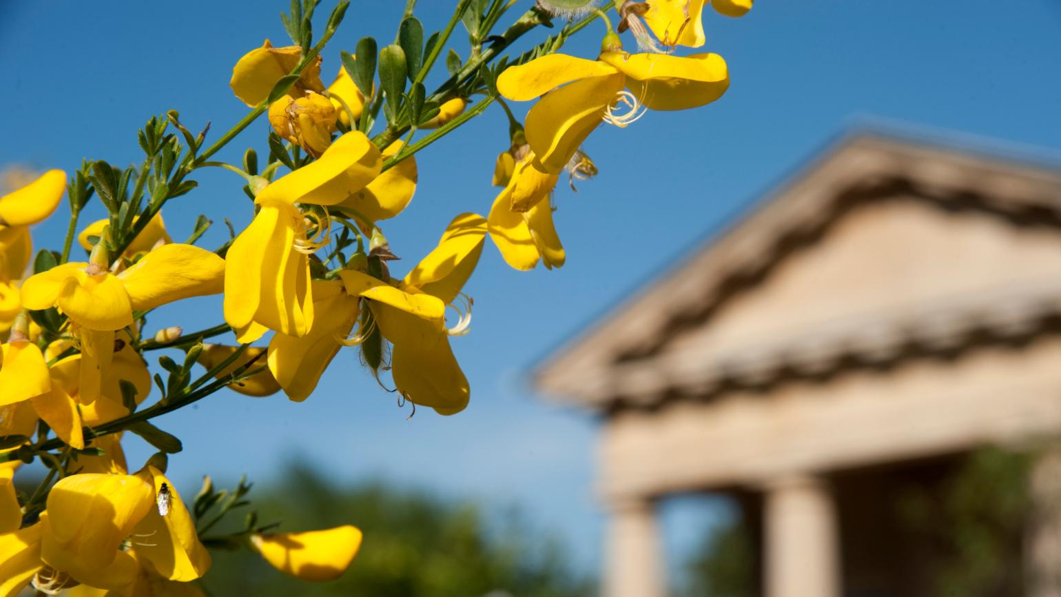 Yellow flowers against a blue sky in the Mediterranean Garden