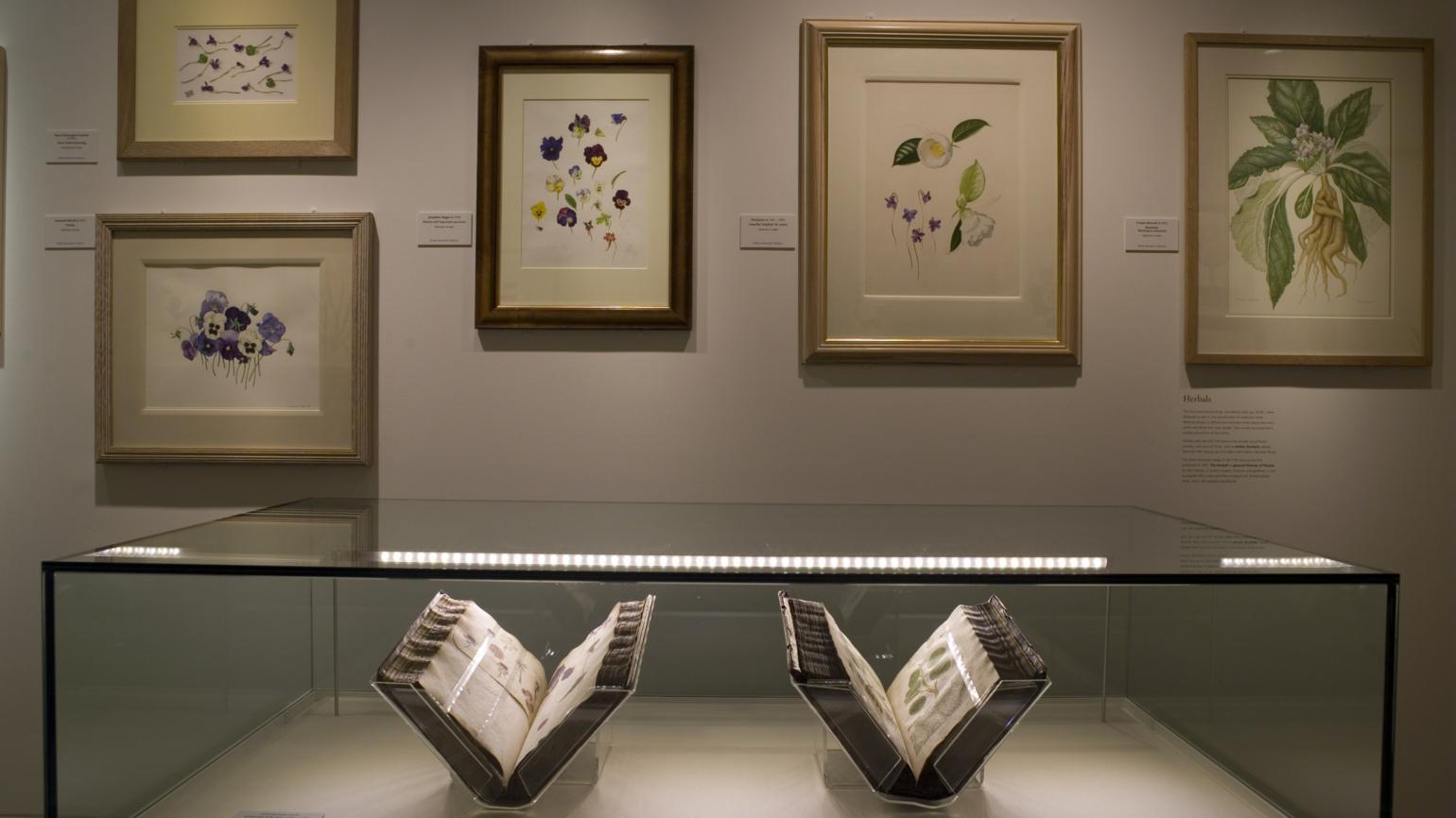 Books and paintings on display in the Shirley Sherwood Gallery of Botanical Art