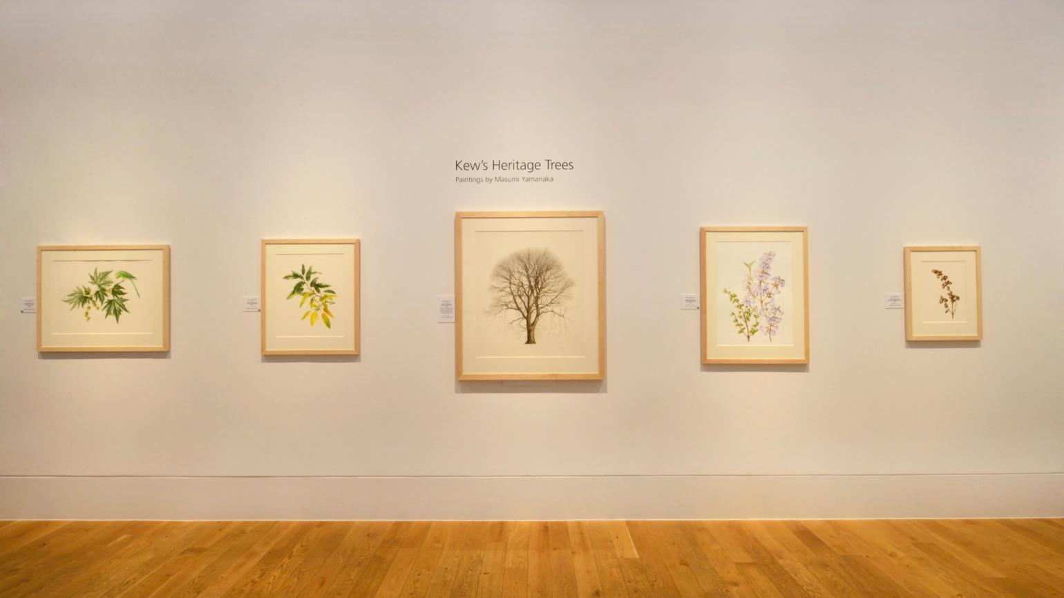 Paintings on display in the Shirley Sherwood Gallery of Botanical Art