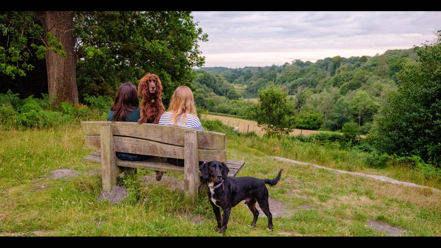 Two women sit on a bench whilst their dogs peer to camera