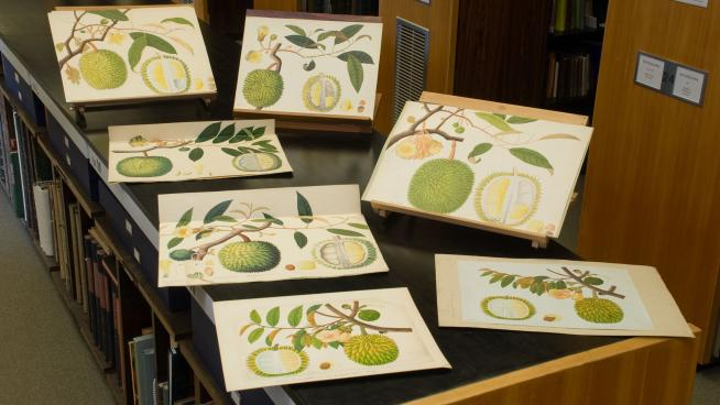 Botanical illustrations on show in the Library