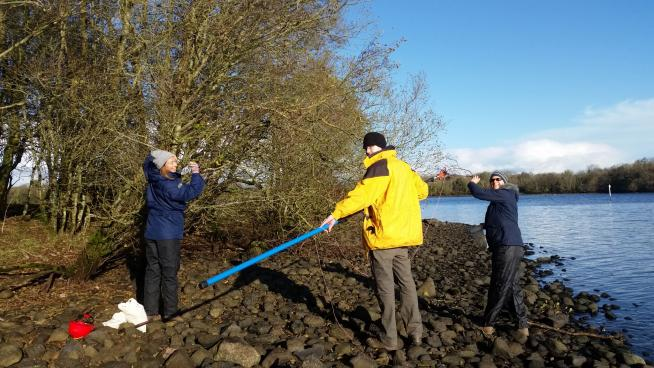 Image showing Collecting alder seed in Northern Ireland
