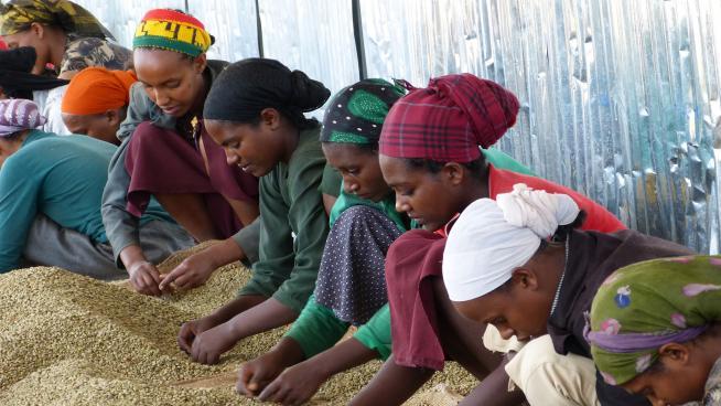 Sorting seeds at Yayu Biosphere Reserve, Ethiopia
