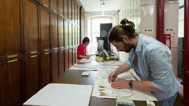 Digitising herbarium specimens for the Global Plants Initiative