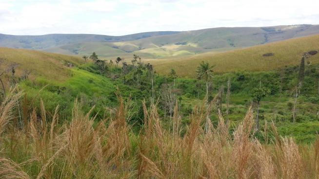 Grasses and savannas of Madagascar