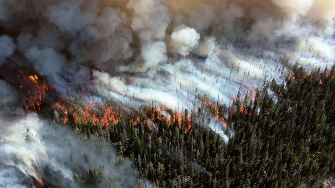 Land cover change - wildfires