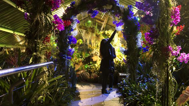An arch at Orchid Festival After Hours 2019