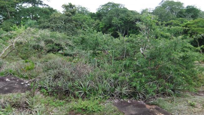 Tropical Important Plant Area in Bolivia