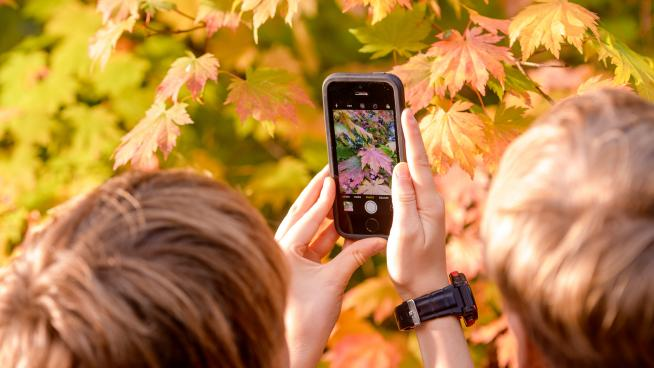 Child taking pictures on mobile at Wakehurst in autumn